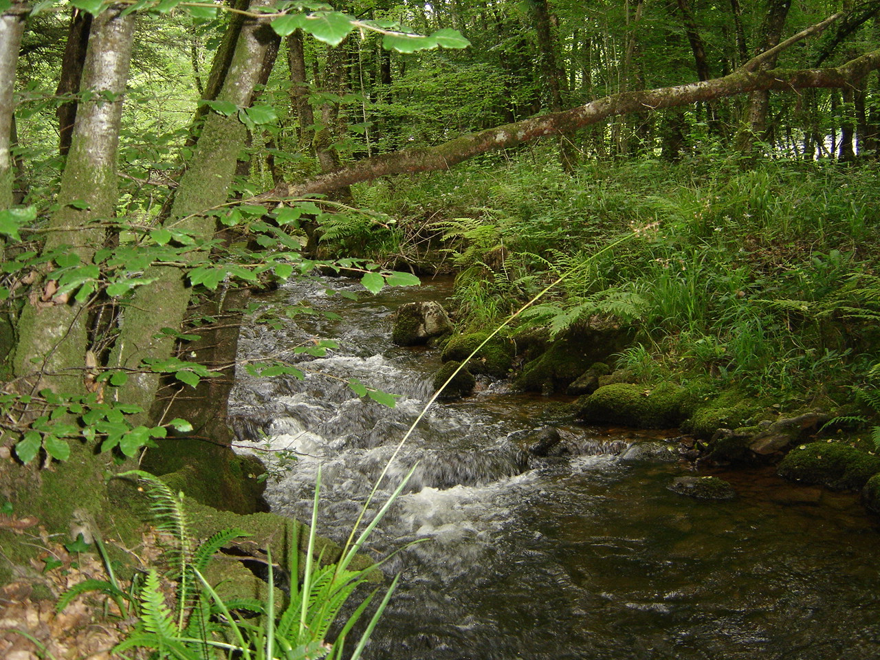 bretagne-vivante-riviere