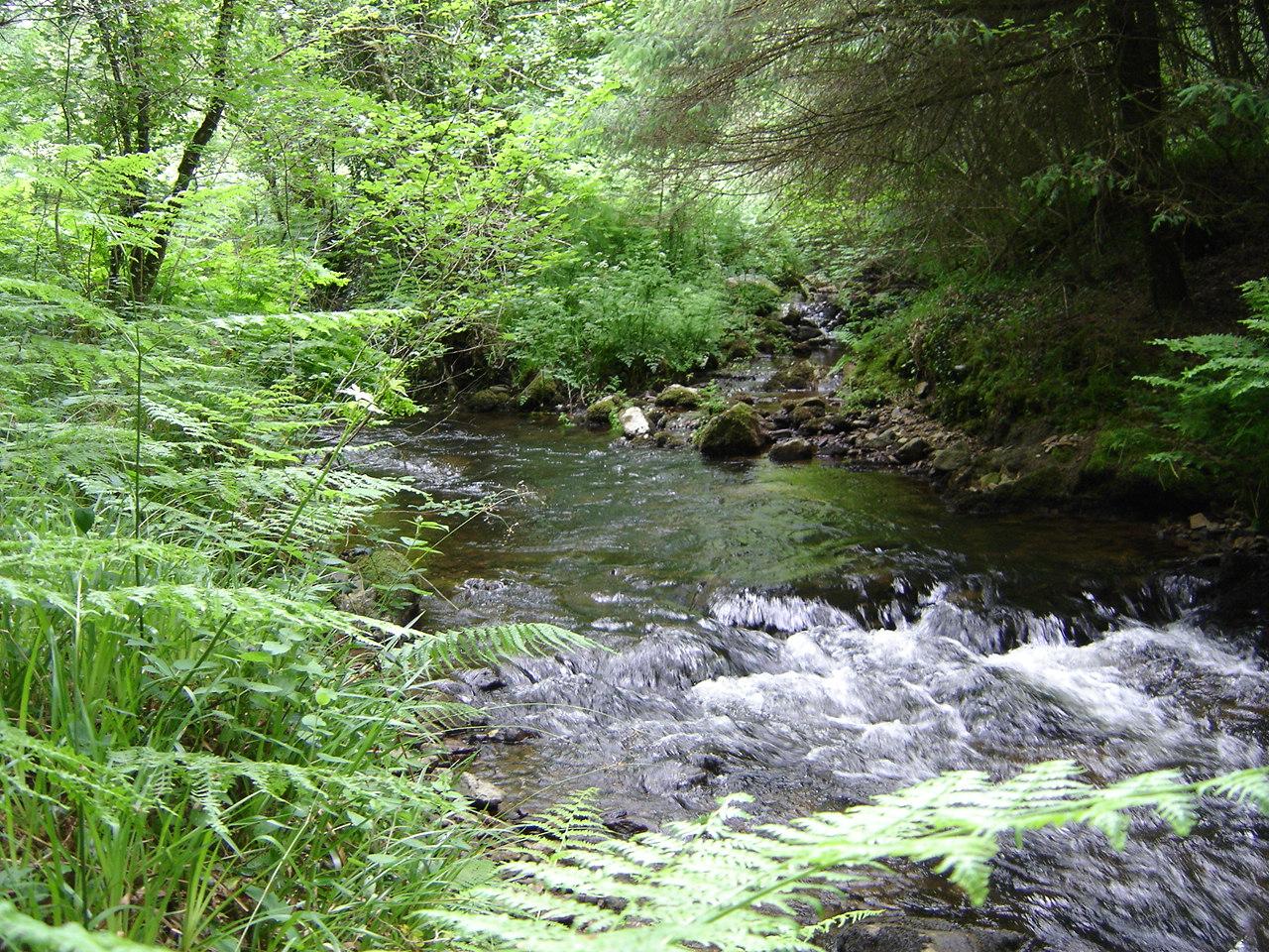 La rivière qui descent de St Rivoal