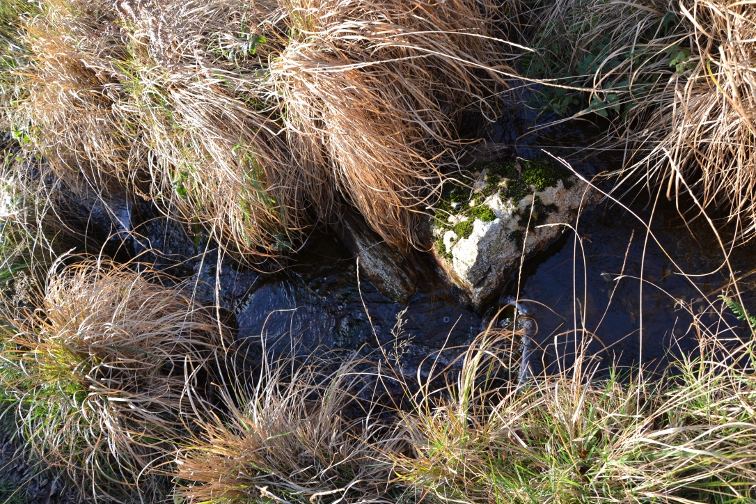 Les sources de l'Élorn qui baigne le lac du Drennec